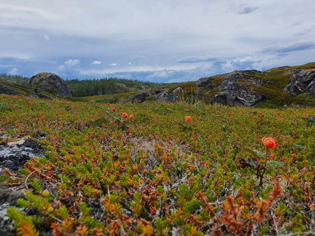 Морошковые поля и скалы Сонострова